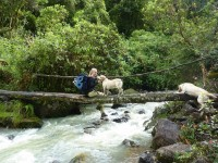 Trekking Tour in Ecuador Crossing a River during the trip from Andes´s Lloa Town to Mindo Cloudforest